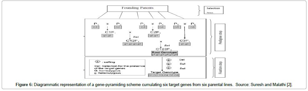 plant-pathology-microbiology-gene-pyramiding