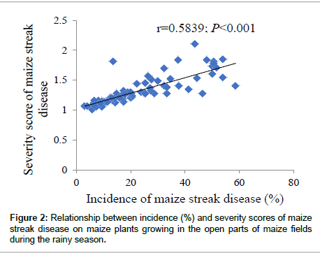 plant-pathology-microbiology-maize-streak-disease