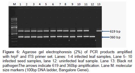 plant-pathology-microbiology-molecular-size-markers
