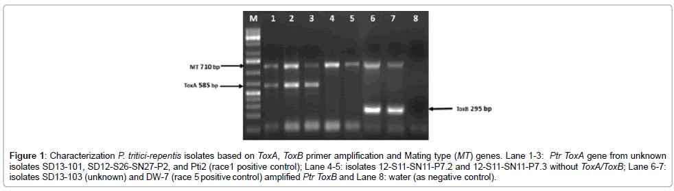 plant-pathology-microbiology-primer-amplification