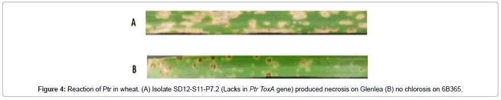 plant-pathology-microbiology-produced-necrosis