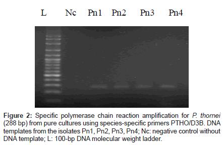 plant-pathology-microbiology-reaction-amplification