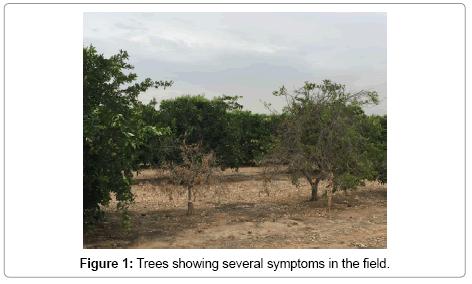 plant-pathology-microbiology-several-symptoms