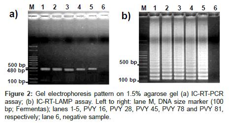 plant-pathology-microbiology-size-marker