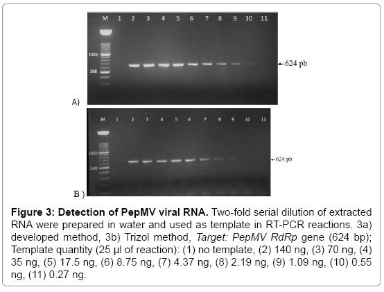 plant-pathology-microbiology-viral-RNA