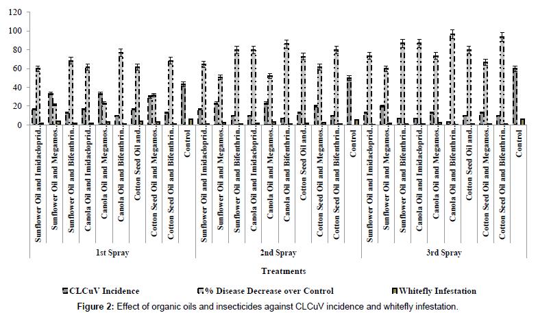 plant-pathology-microbiology-whitefly-infestation