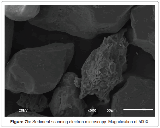 pollution-and-effects-electron-microscopy