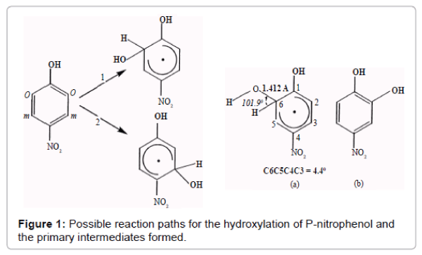 pollution-and-effects-hydroxylation-P-nitrophenol