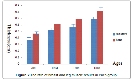 poultry-fisheries-rate-breast-leg-muscle