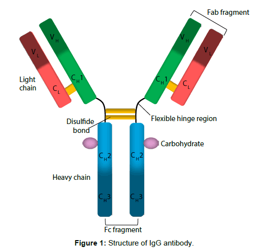 primary-health-care-Structure-antibody