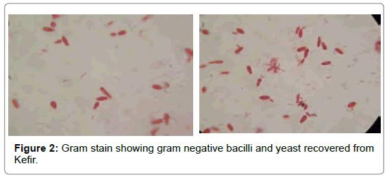 probiotics-health-negative-bacilli