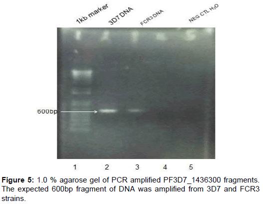 proteomics-bioinformatics-agarose-fragments-amplified