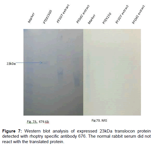 proteomics-bioinformatics-analysis-translocon-protein