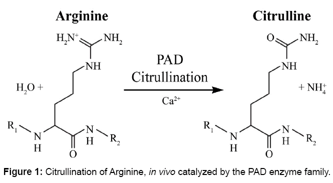 proteomics-bioinformatics-citrullination