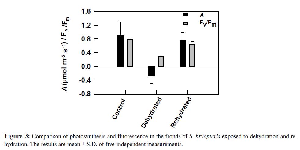 proteomics-bioinformatics-comparison-photosynthesis