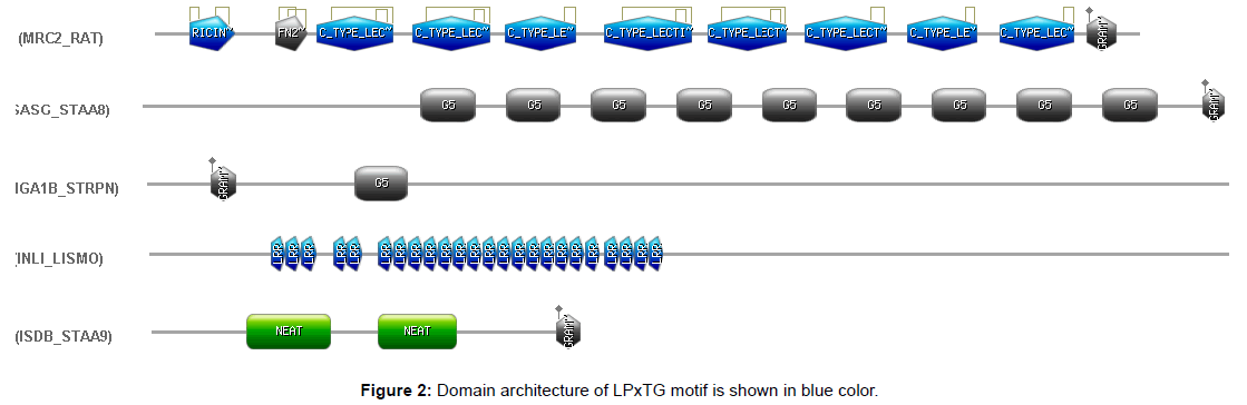 proteomics-bioinformatics-domain-architecture-motif