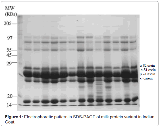 proteomics-bioinformatics-electrophoretic-pattern