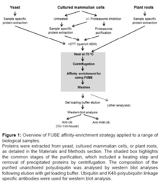 proteomics-bioinformatics-enrichment
