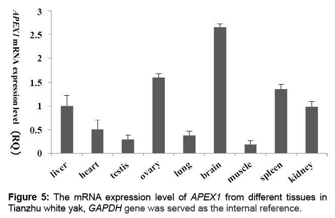 proteomics-bioinformatics-expression