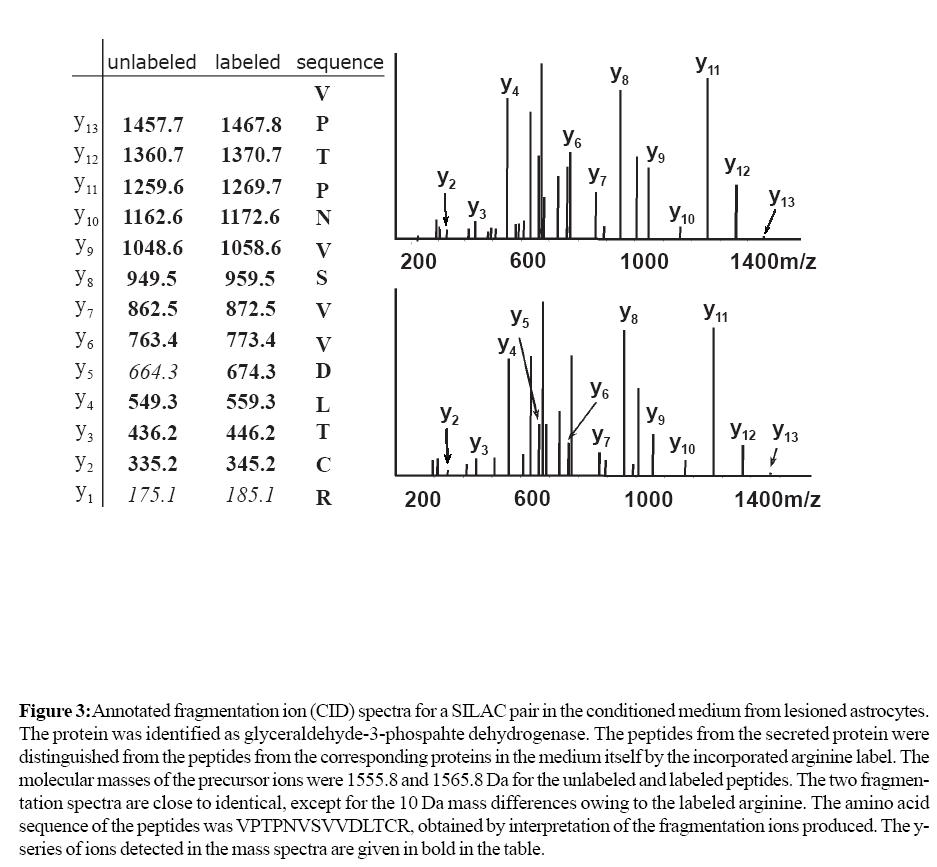 proteomics-bioinformatics-fragmentation