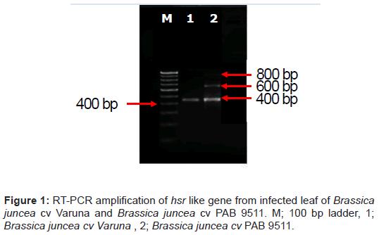 proteomics-bioinformatics-gene-infected-varuna