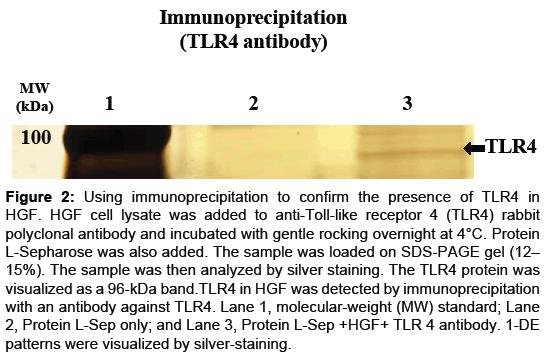 proteomics-bioinformatics-immunoprecipitation