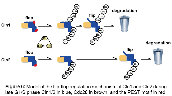 proteomics-bioinformatics-mechanism