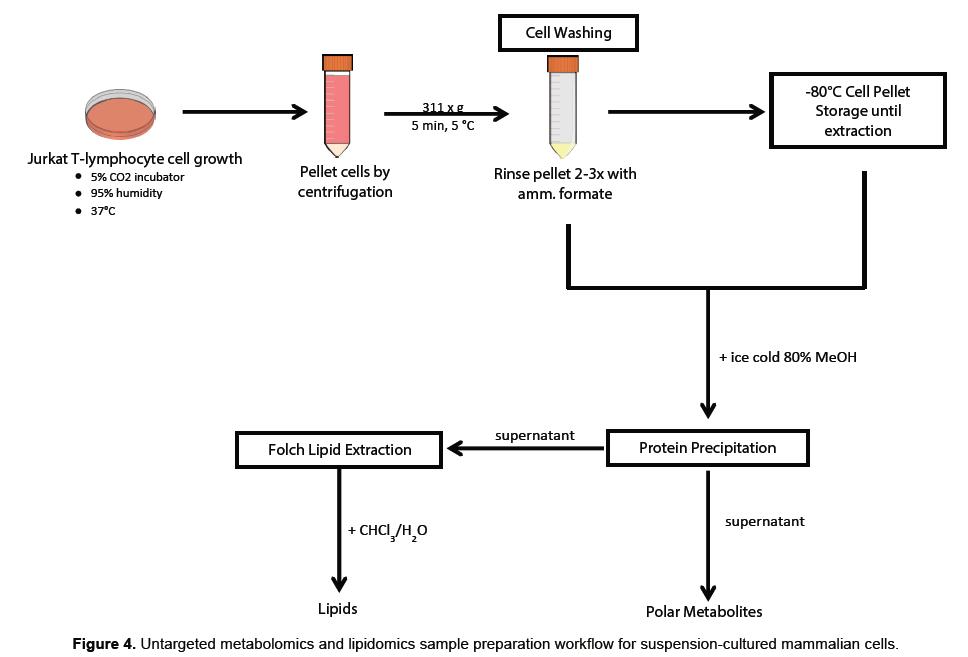 proteomics-bioinformatics-metabolomics-lipidomics-mammalian