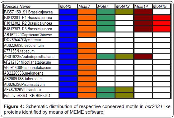 proteomics-bioinformatics-motifs-proteins-software