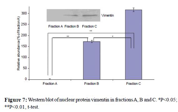 proteomics-bioinformatics-nuclear-protein-vimentin