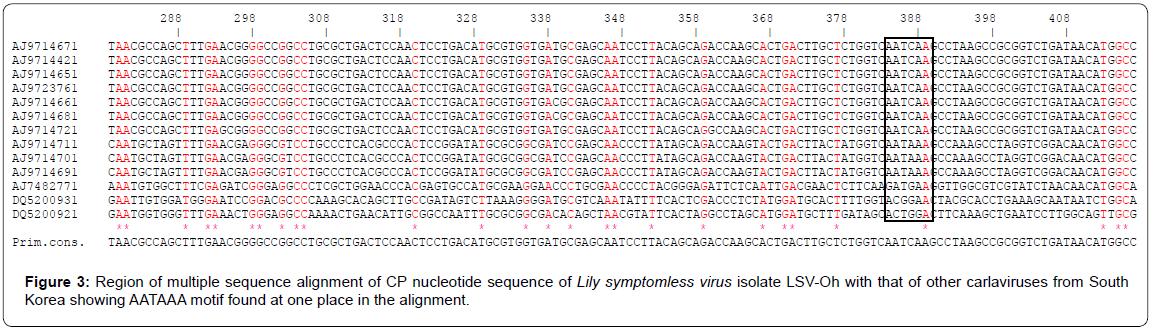 proteomics-bioinformatics-nucleotide-carlaviruses-motif