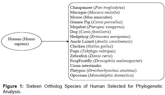 proteomics-bioinformatics-ortholog-human-phylogenetic