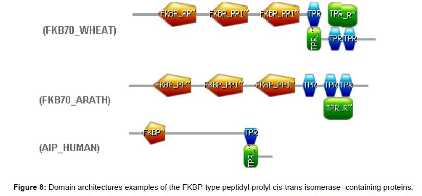 proteomics-bioinformatics-peptidyl-prolyl-isomerase