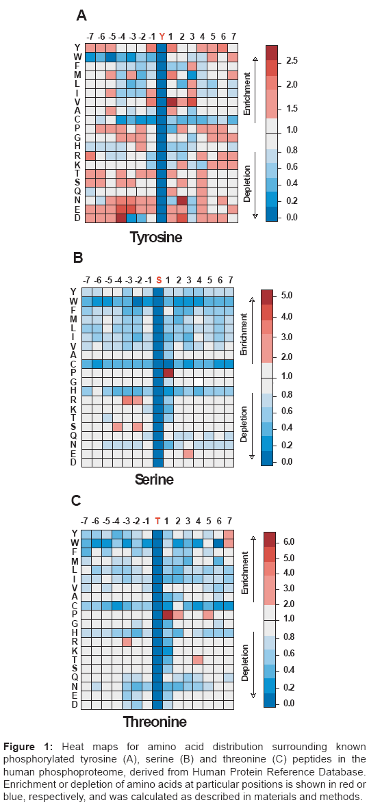 proteomics-bioinformatics-phosphorylated