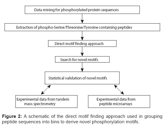 proteomics-bioinformatics-phosphorylation