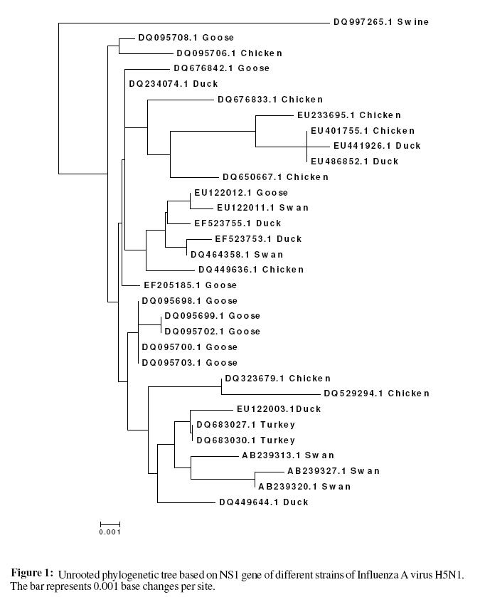 proteomics-bioinformatics-phylogenetic