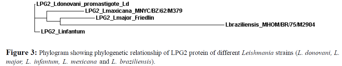 proteomics-bioinformatics-phylogram-phylogenetic
