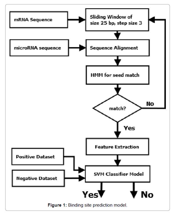 proteomics-bioinformatics-prediction-model