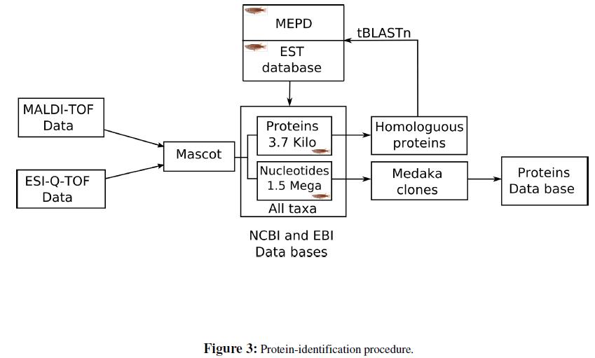 proteomics-bioinformatics-protein-identification