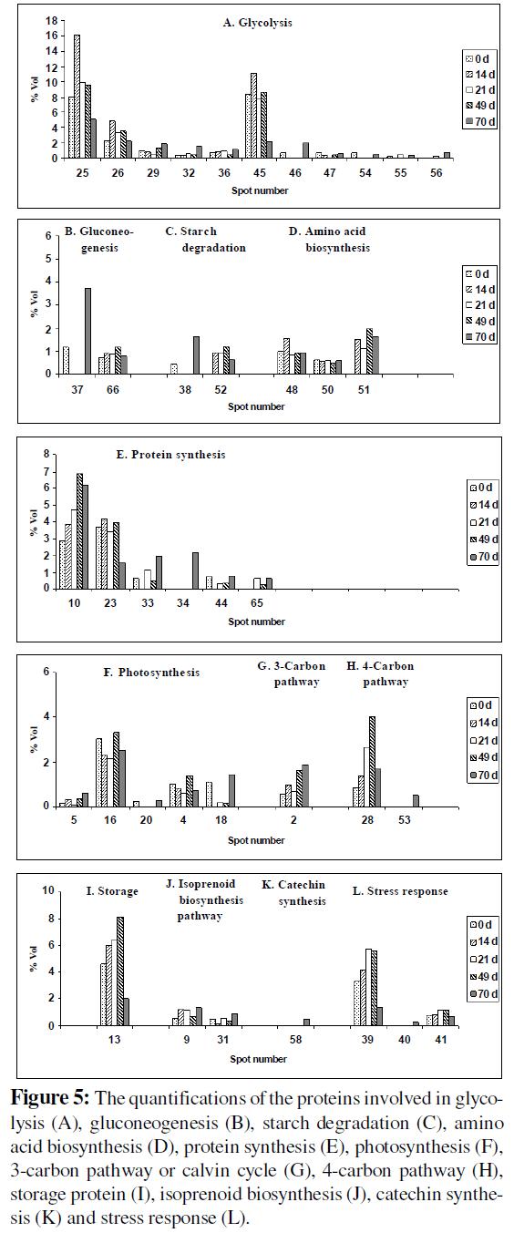 proteomics-bioinformatics-quantifications-proteins