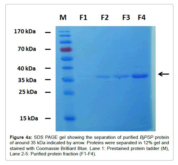 proteomics-bioinformatics-separation-purified