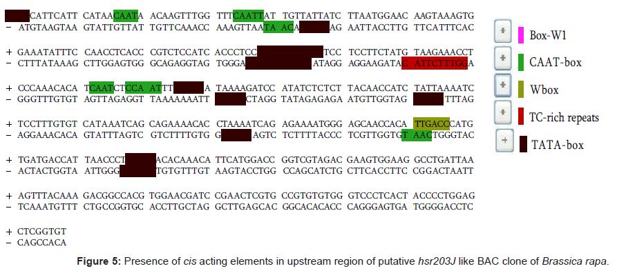 proteomics-bioinformatics-upstream-region-putative
