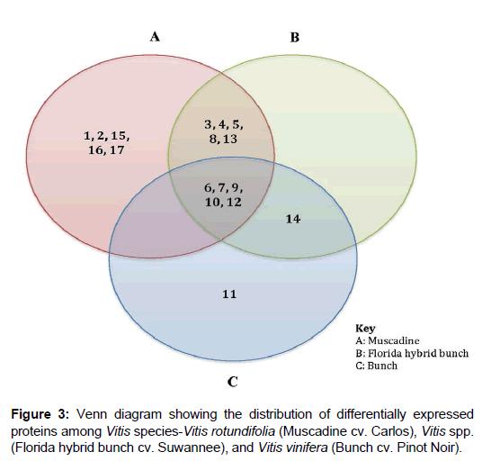 proteomics-bioinformatics-venn-proteins-suwannee