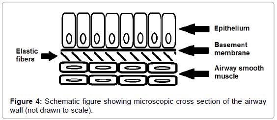 pulmonary-respiratory-medicine-microscopic-cross-section