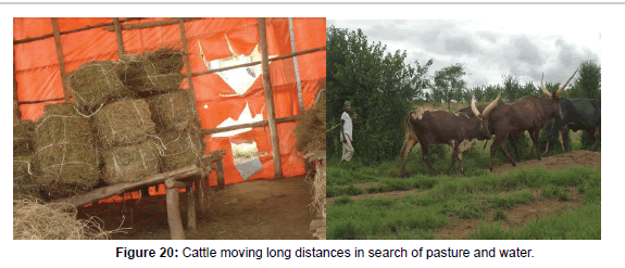 Characterization of Cattle Production Systems in Nyagatare