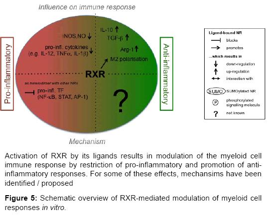 rheumatology-Schematic-overview-RXR