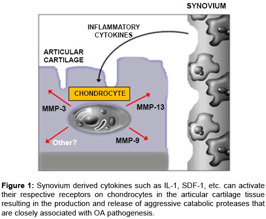 rheumatology-Synovium-derived-cytokines