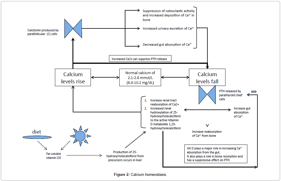 rheumatology-current-Calcium-homeostasis