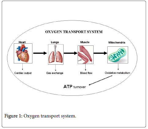 rheumatology-current-Oxygen-transport