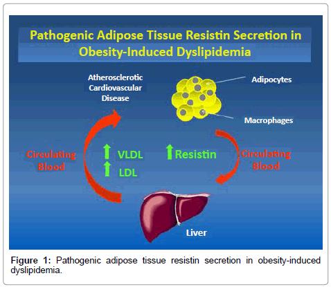 rheumatology-current-Pathogenic-adipose-tissue
